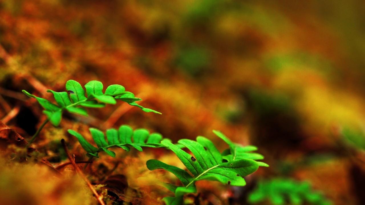 small ferns