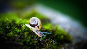 snail-macro