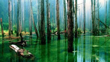 magnificent -swamp-forest