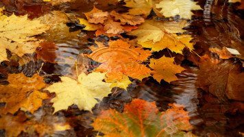 copper-colore- leaves-floating-on-water