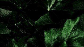 dark-green-leaves
