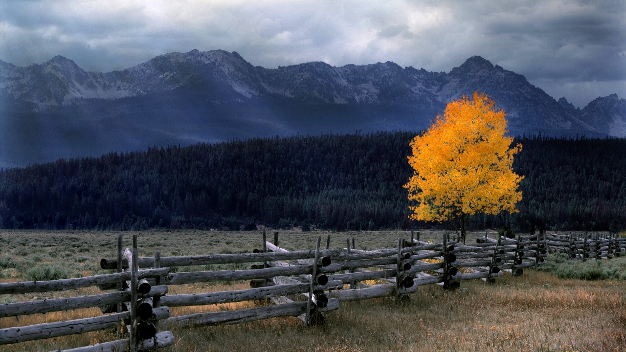 fence for beautiful nature hd wallpaper