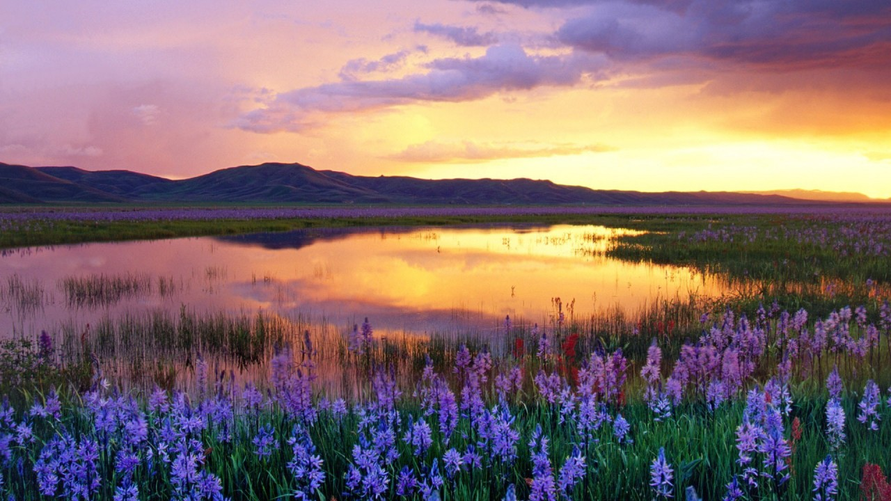 flower  swamp sunset