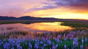 flower- swamp-sunset