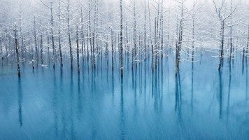 A-flooded-forest-in-winter