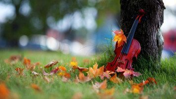 Violin-resting-on-tree