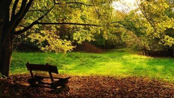 autumn-bench-hd-wallpaper