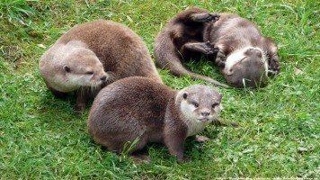 hd-wallpaper-otters_blackpool