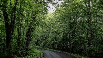The-road-through-the-forest
