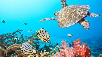 Sea-underwater-turtle-and-fish-hd-wallpaper
