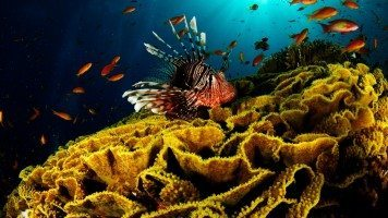 beautiful-underwater-hd-wallpaper