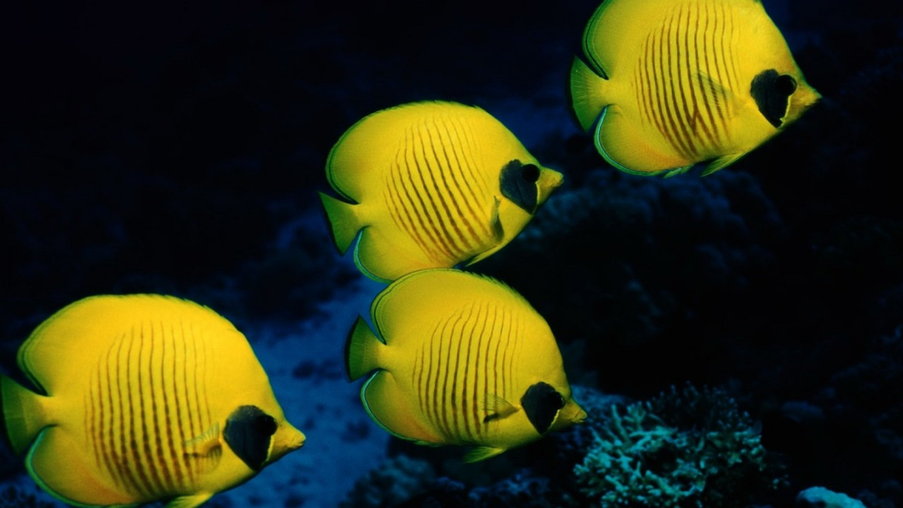 fish underwater hd wallpaper