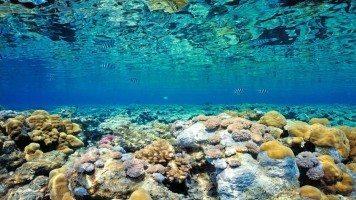 hd-wallpaper-coral-ocean