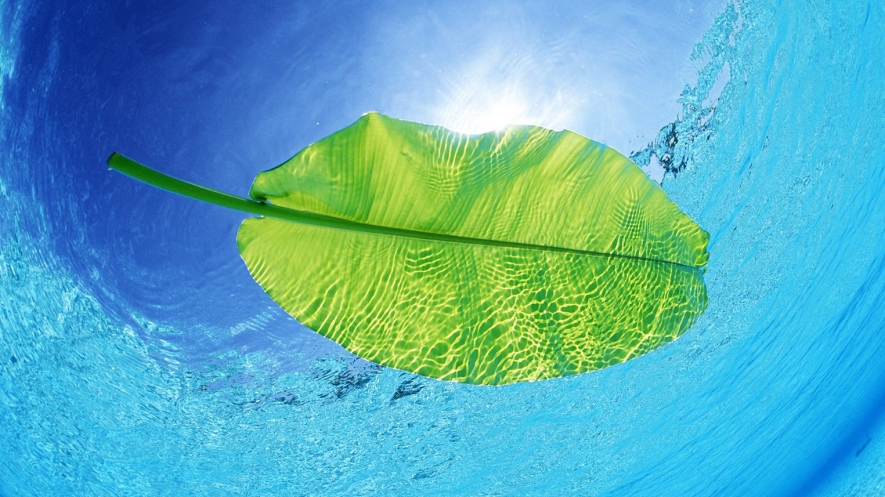 hd wallpaper leaf underwater