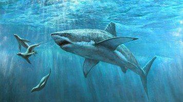 hd-wallpaper-pictures-shark-underwater-seal