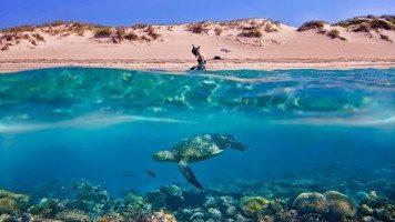 hd-wallpaper-turtle-beach-underwater
