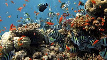 hd-wallpaper-underwater-fish