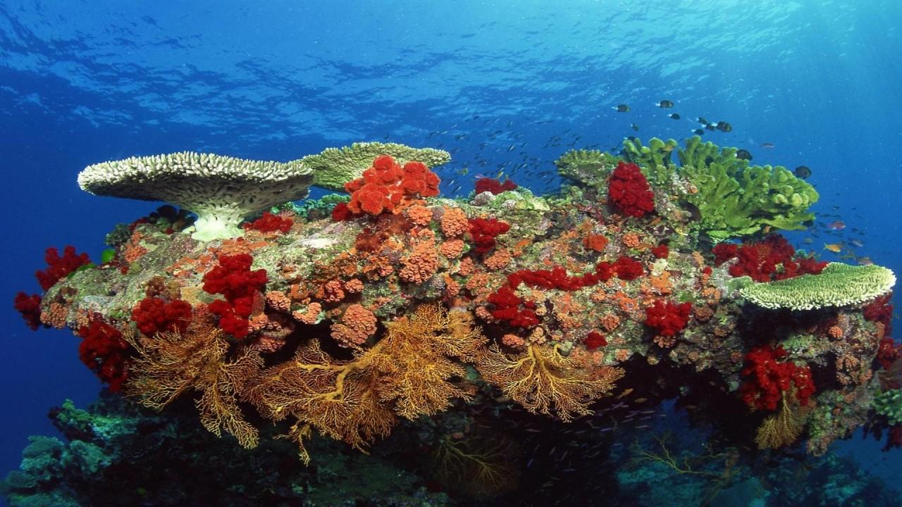 hd wallpaper underwater pack