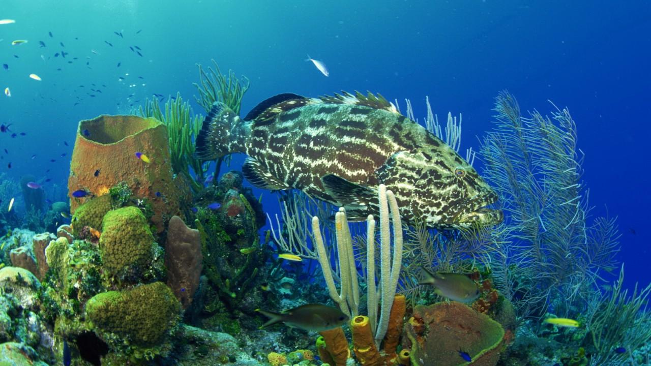 hd wallpaper underwater world