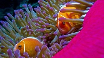 underwater-fish-hd-wallpaper