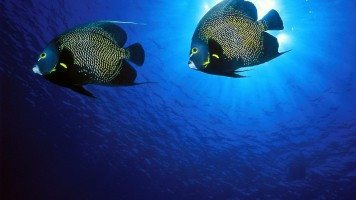 underwater-hd-beautiful-picture-hd-wallpaper
