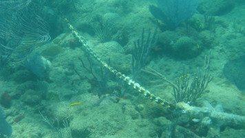 underwater-pictures-rincon-puerto-hd-wallpaper