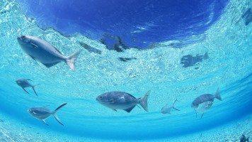 underwater-wallpaper-hd-wallpaper