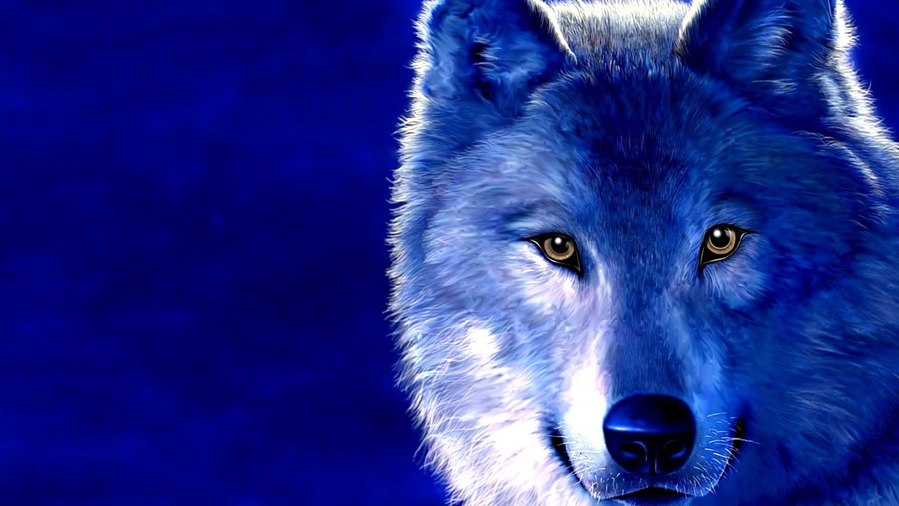 blue wolf wallpaper hd