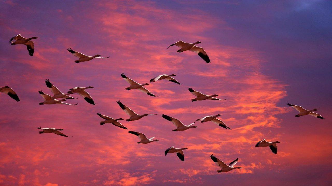 hd wallpaper birds