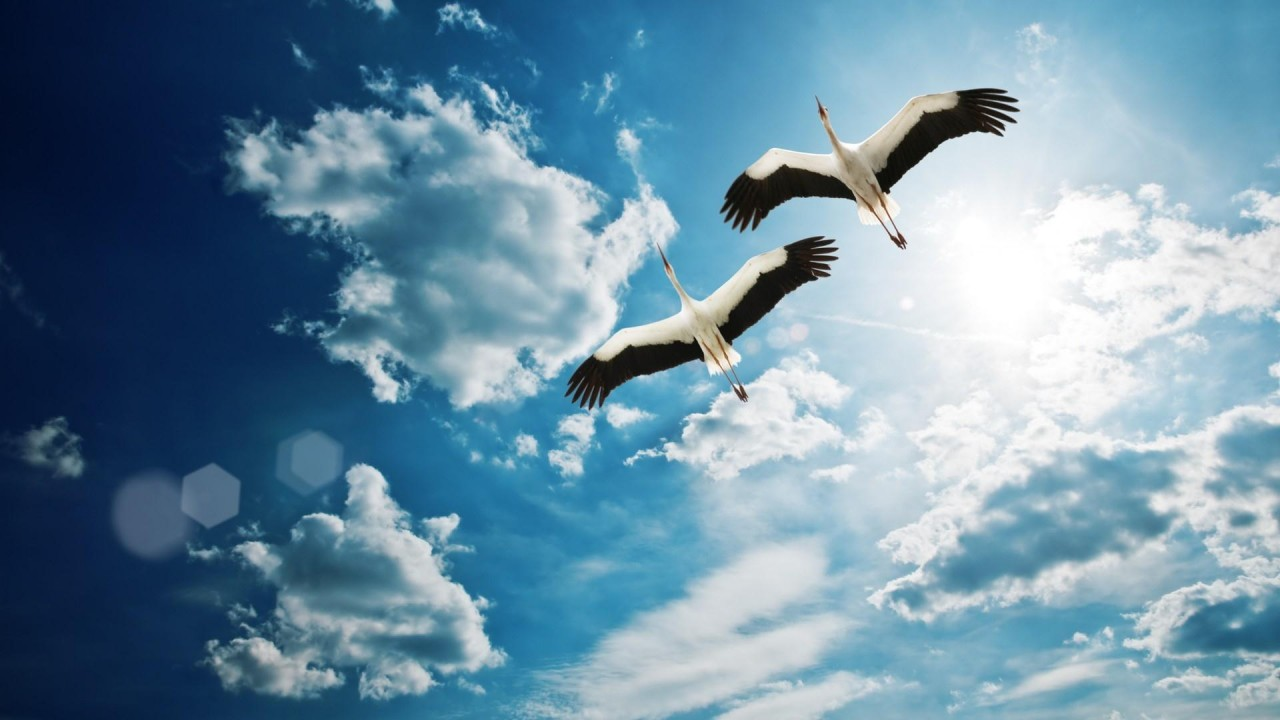 hd wallpaper birds flying 1920×1080 wallpaper