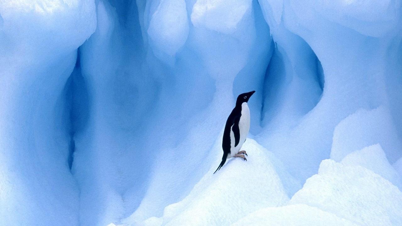 penguin normal