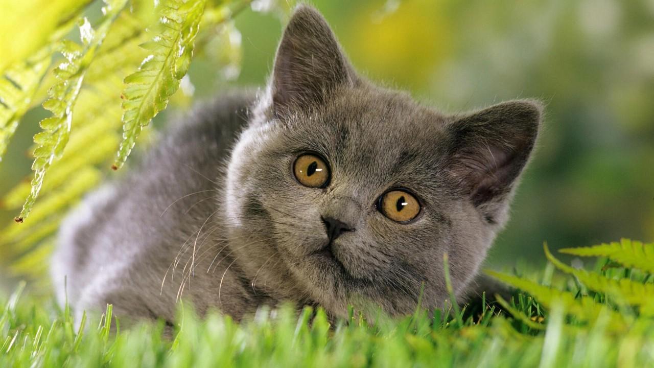 cat animals hd wallpaper