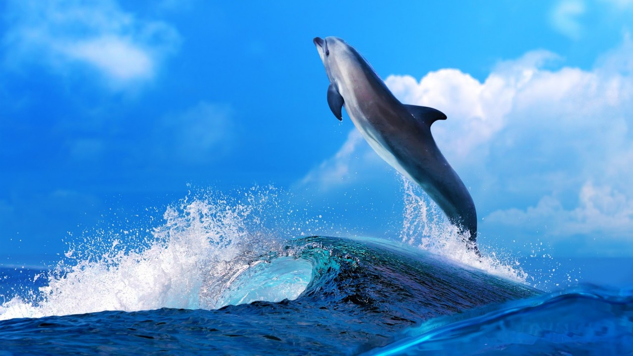dolphin in jump