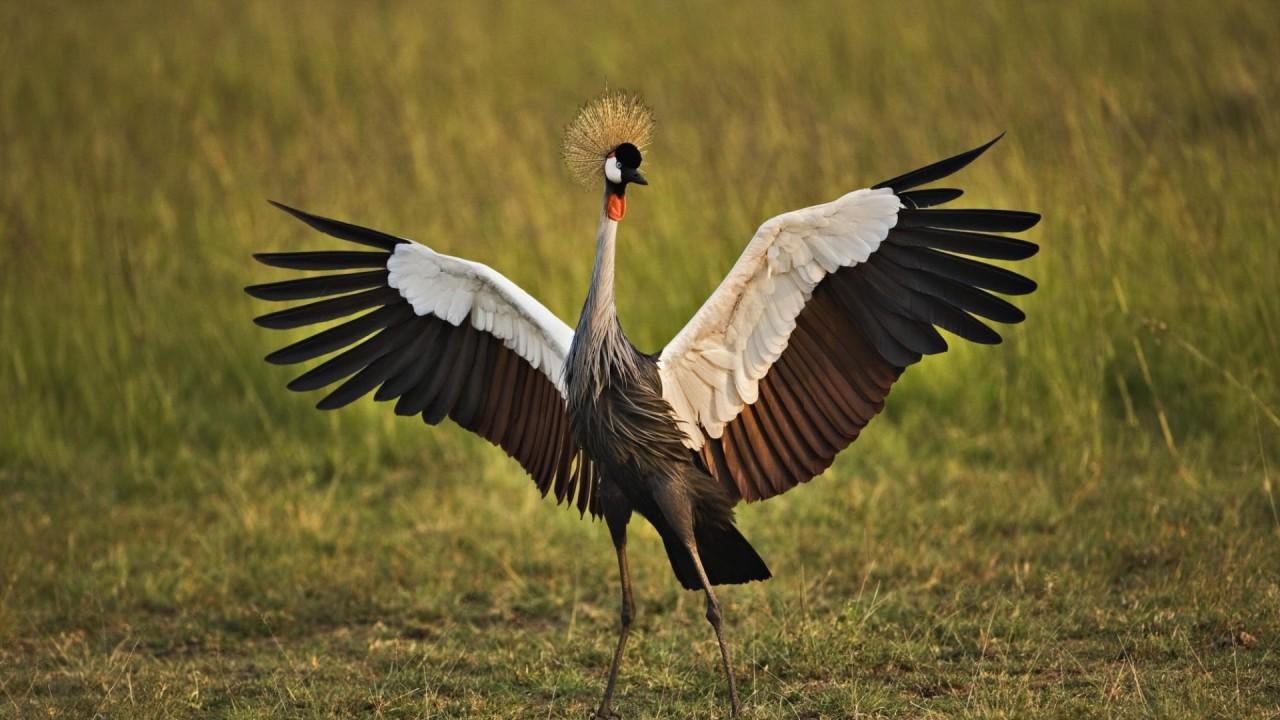hd wallpaper birds granes grass feathers color