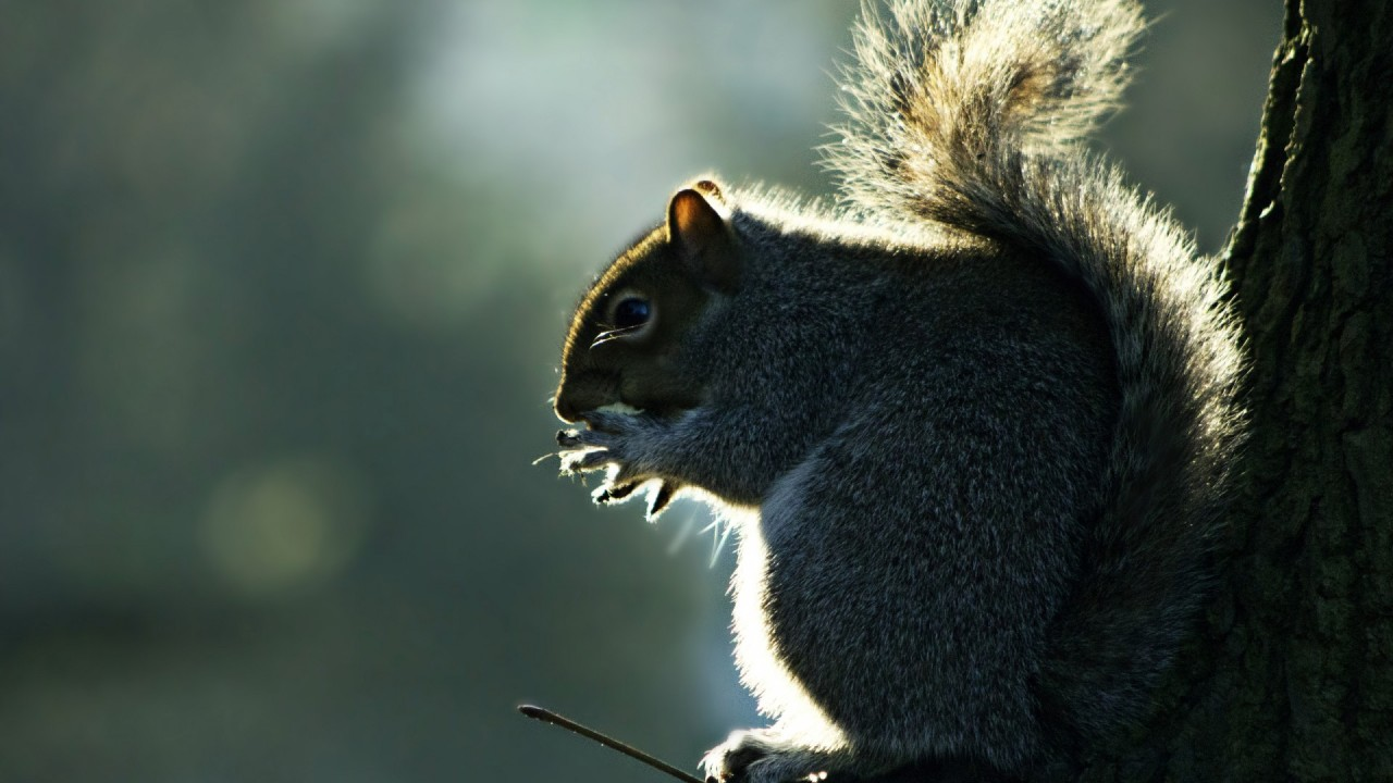 squirrel in profile