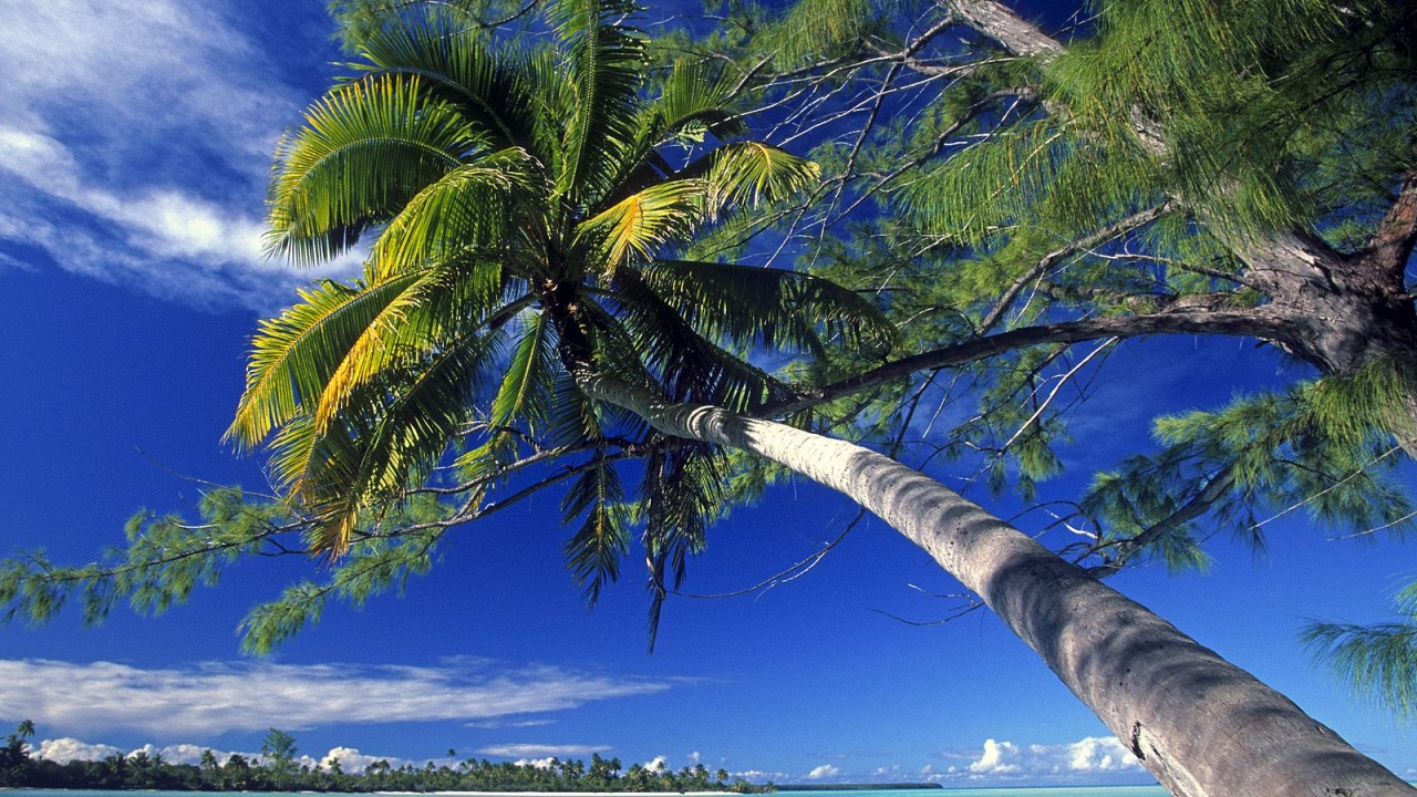palm tree society island beach normal
