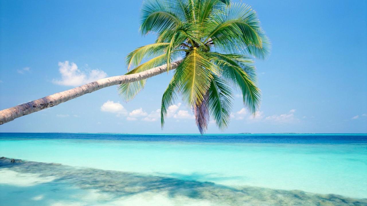 tropical island normal