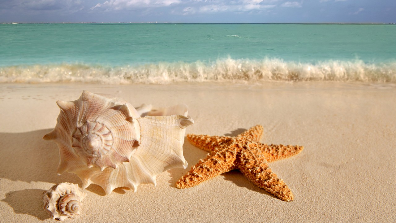 hd wallpaper beach starfish