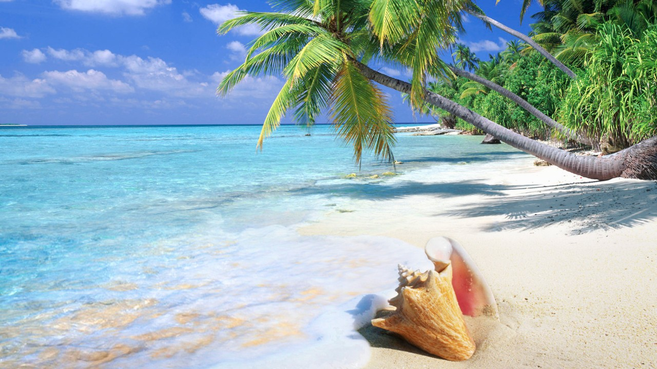 hd wallpaper tropical beach shell