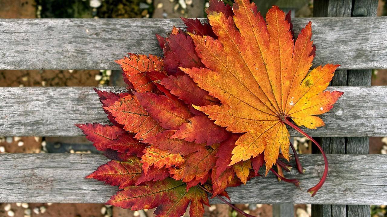 brassy leaves