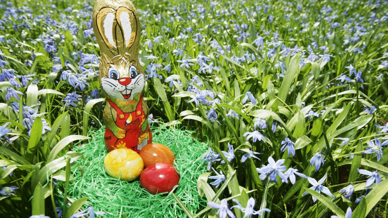 hd wallpaper easter bunny and eggs