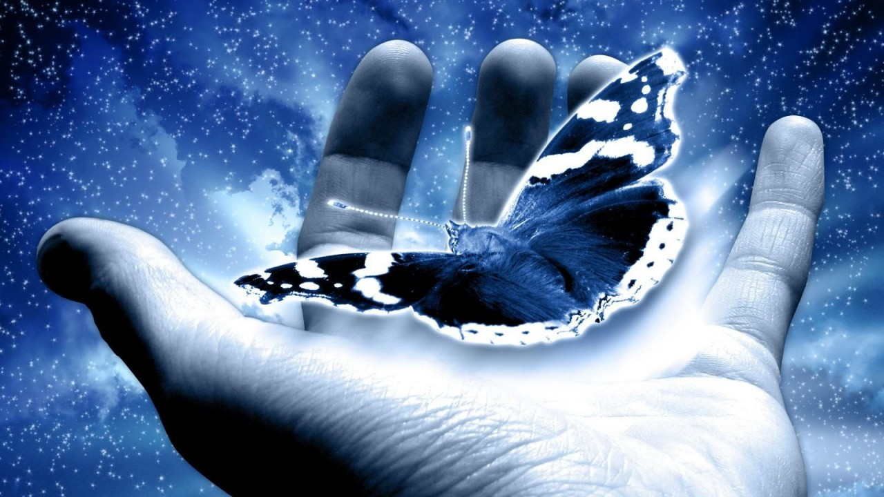 blue butterfly in my hand