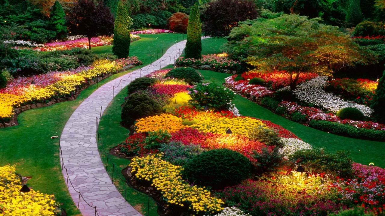 beautiful flowers british hd wallpaper
