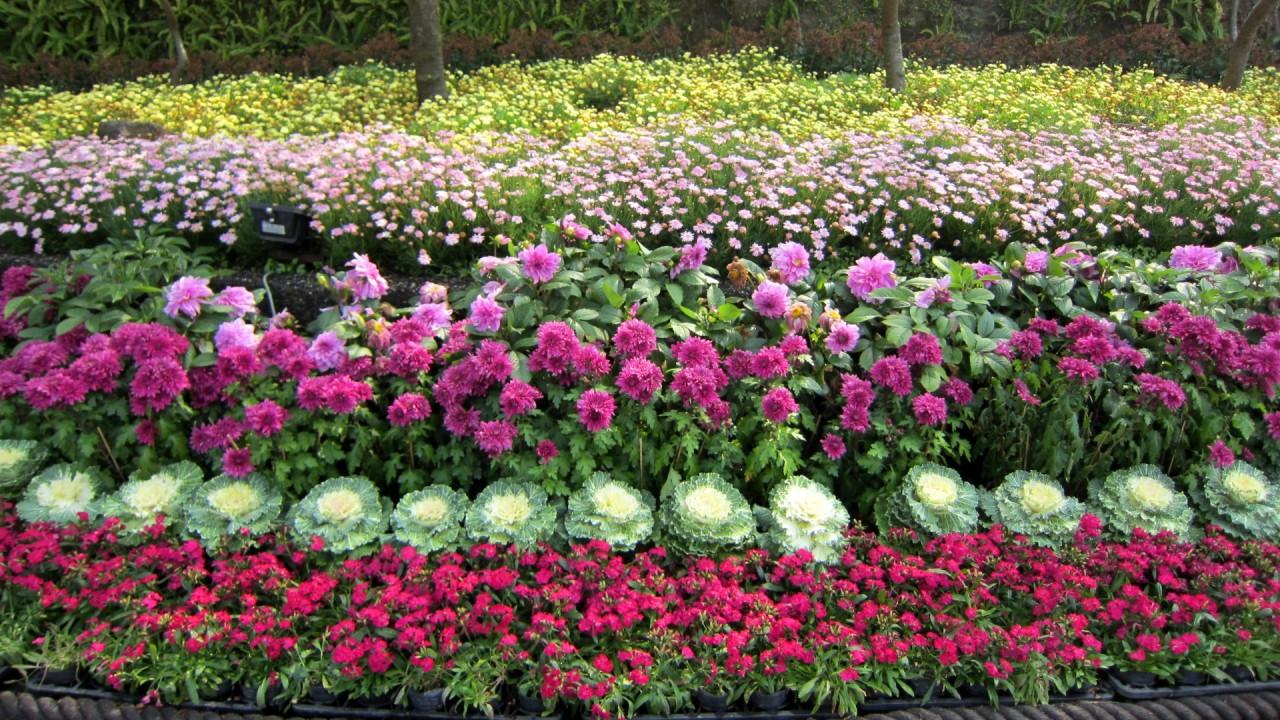 beautiful flowers decorate hd wallpaper