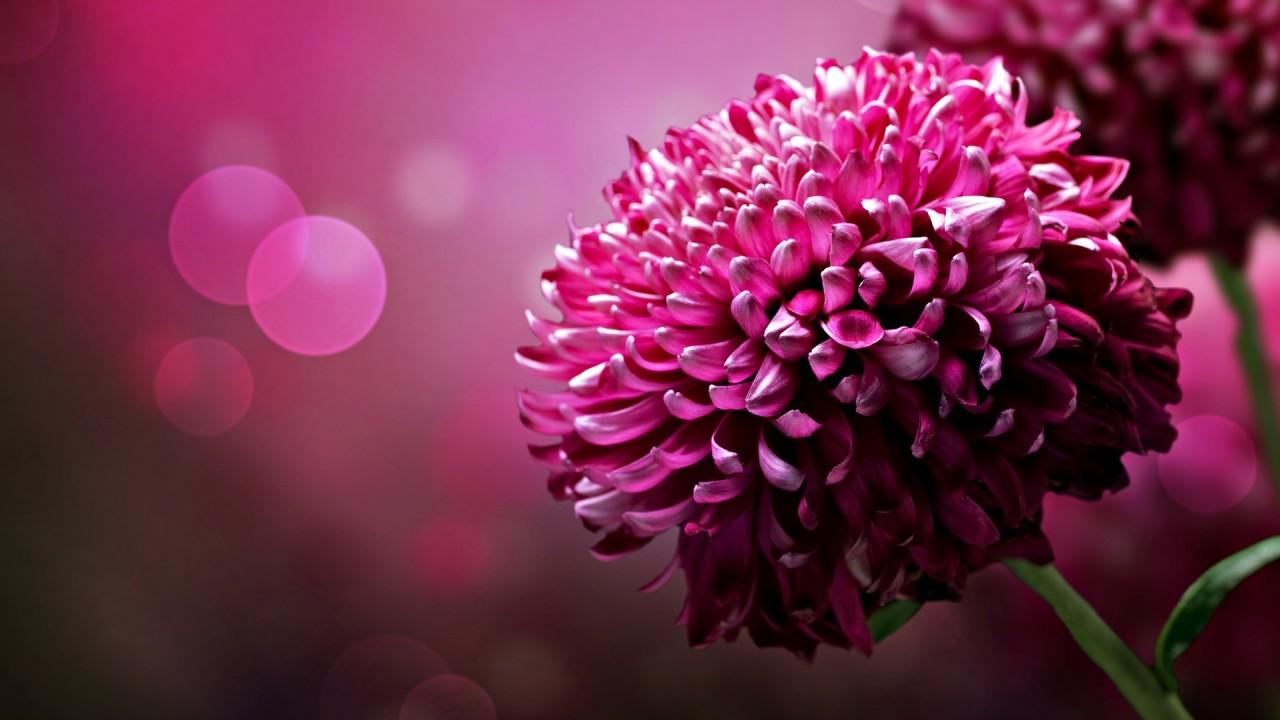 hd wallpaper beautiful flowers