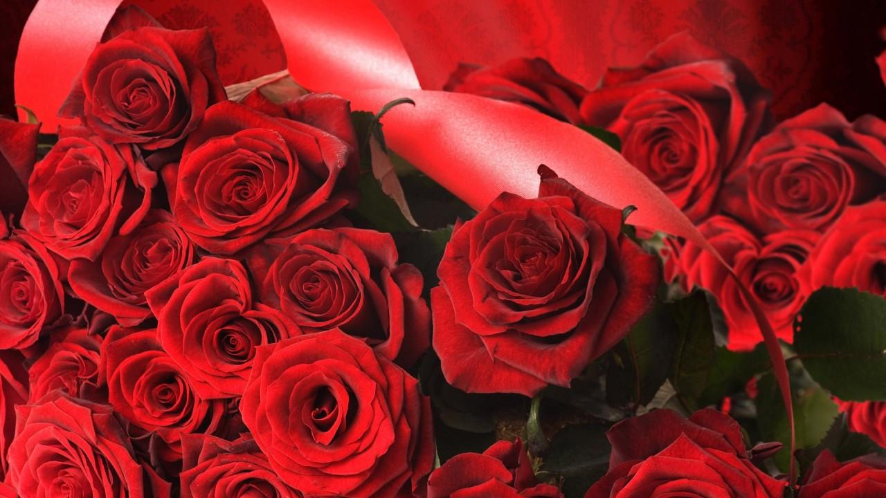 hd wallpaper Red Rose Flowers