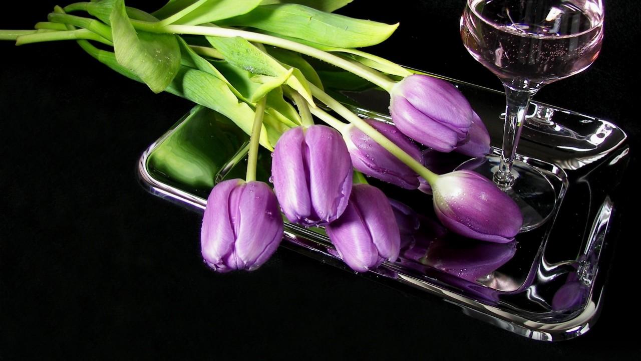 hd wallpaper flowers tulips