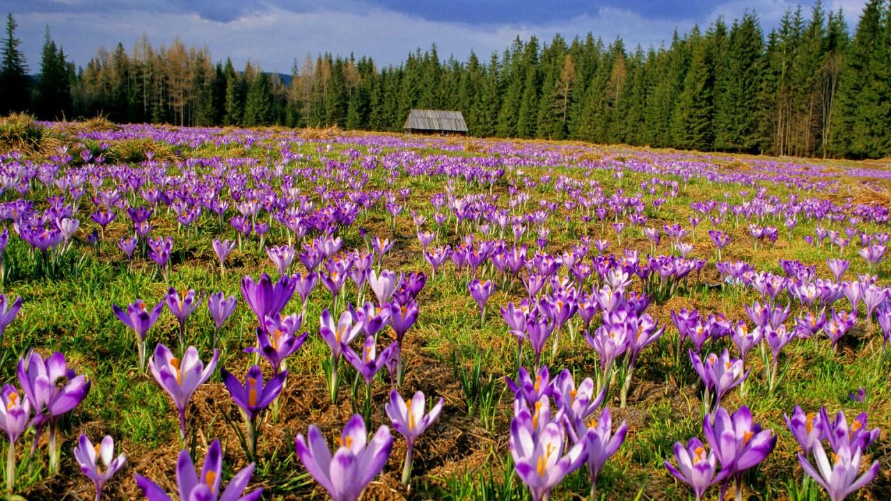 picture beautiful flowers hd wallpaper
