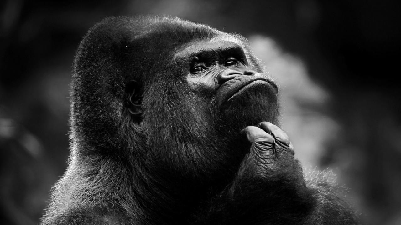 gorilla thinking