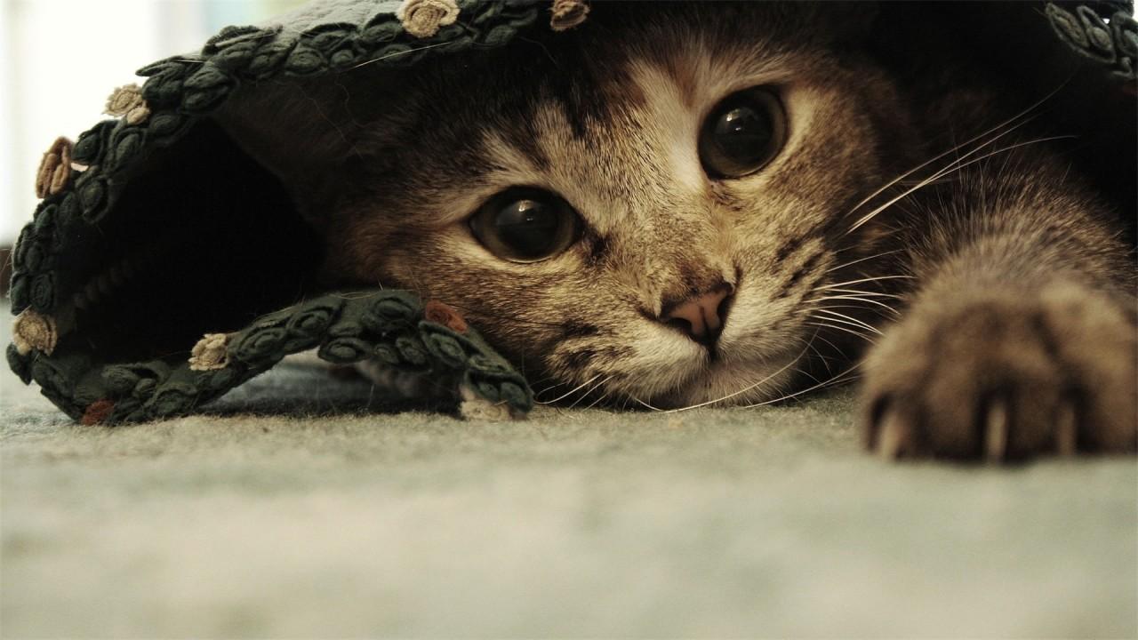 hd wallpaper cat funny